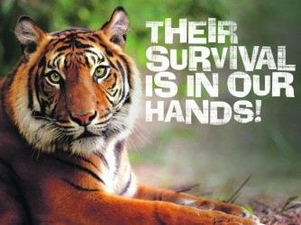 #SHP: Tiger Conservation by Hi-5 House of Learning